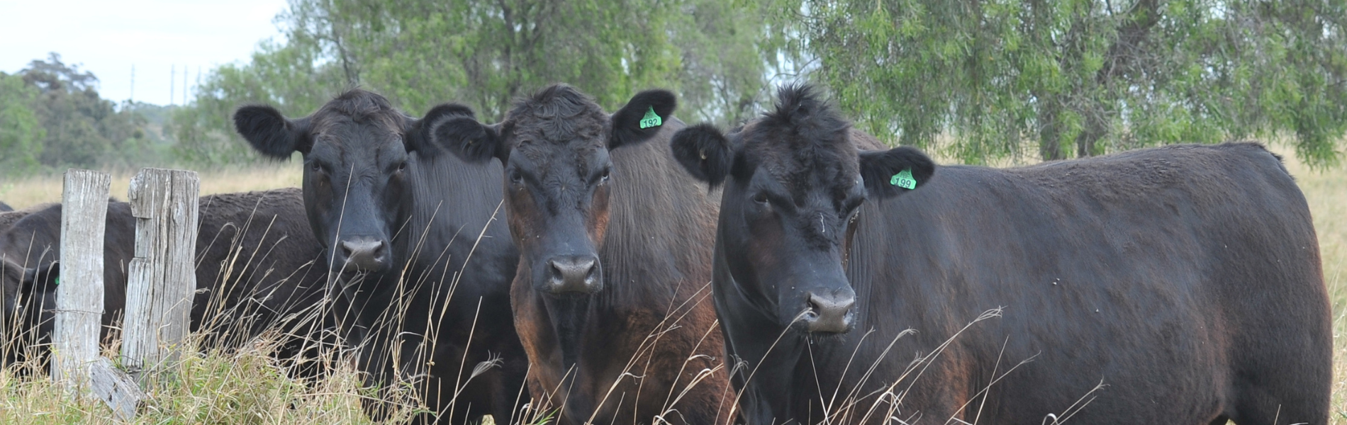 Promising results for Upper Hunter Grazing Study