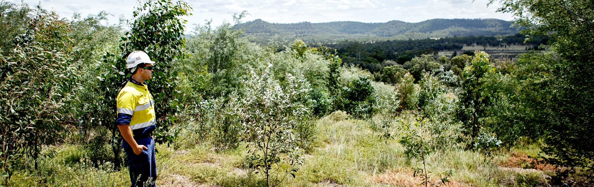 Rehabilitation Case Study: Native seed reclaiming on mined land (Yancoal MTW and HVO sites)